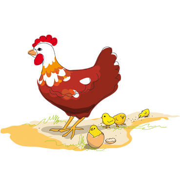illustration_poule